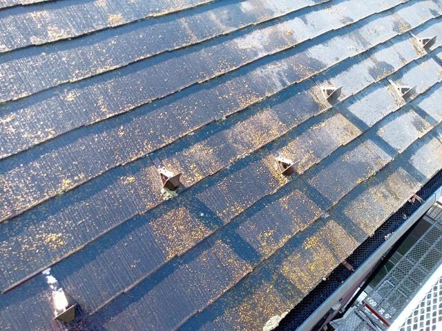 狭山市広瀬 屋根カバー工事 現地調査 スレート屋根の苔、汚れ