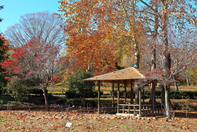 コラム 東屋 公園