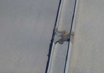 歪みや亀裂が生じたアルミの屋根